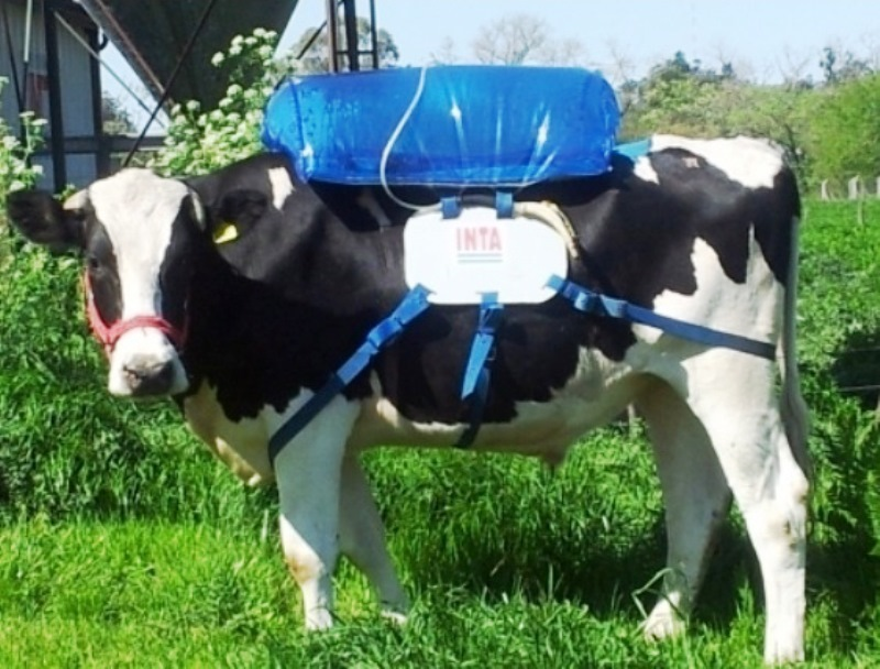 Pum da vaca pode servir de combustível para o seu carro