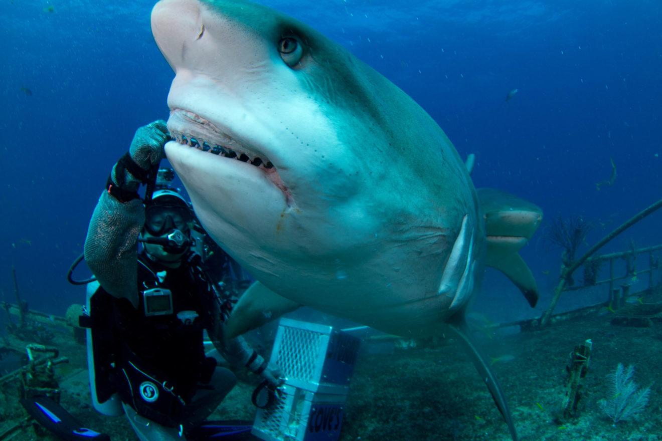 Homem arrisca vida para ajudar tubarão