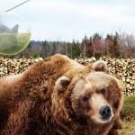 O zoo da Dinamarca que prende visitantes e solta animais