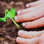 Como tornar seu site e sua navegação pela internet mais verdes? Veja dicas!