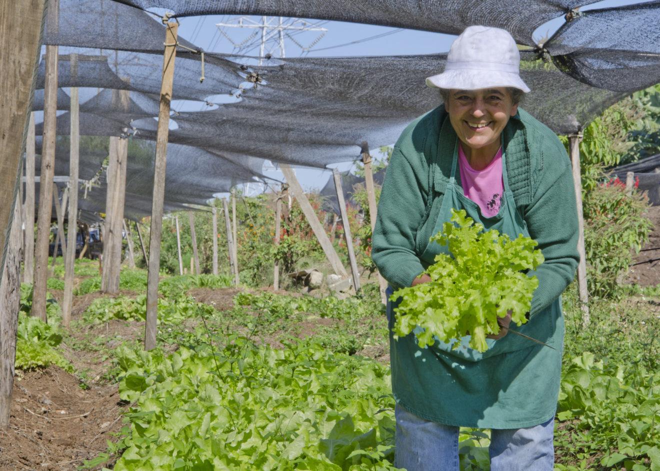 Conheça a ONG que transforma terrenos públicos em hortas comunitárias