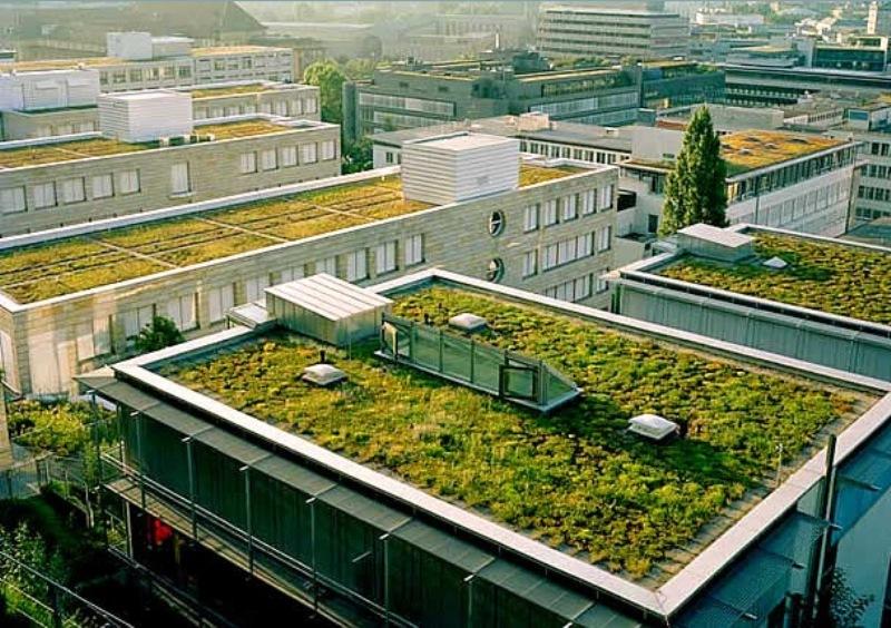 Telhado verde é obrigatório em Copenhague e Toronto