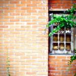 Brasileira cria técnica para produzir tijolo a partir de lixo
