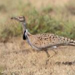 Polícia confunde GPS com bomba e mata ave em extinção