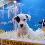 Expor filhotes em gaiolas pode render multa a pet shops