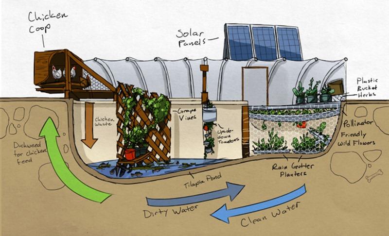 Casal cultiva alimentos dentro da piscina (vazia) e gasta até 75% menos no supermercado