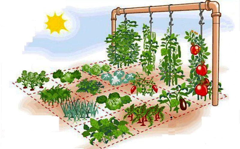 Como fazer uma horta em casa ocupando apenas 1 m²
