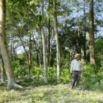 Indiano planta sozinho floresta maior que Central Park