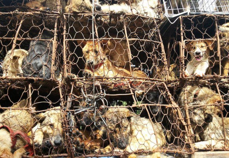 Tuíte e ajude a cancelar festival chinês de carne de cães