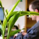 5 aromas para melhorar a produtividade no trabalho