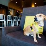 Hotel abriga cães abandonados para hóspedes adotá-los