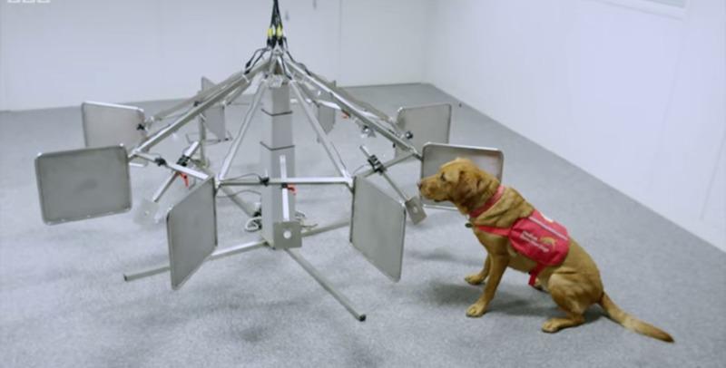 Cachorros são capazes de identificar câncer, aponta estudo