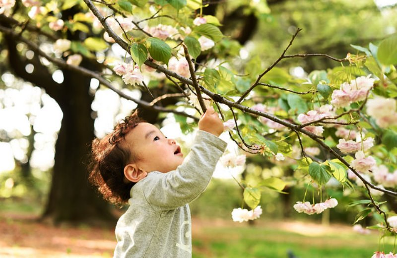 12 cidades brasileiras que plantam uma árvore a cada bebê nascido