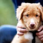 Nada de vender filhotes! Pet shops podem ser obrigados a ter espaço para adoção no MT