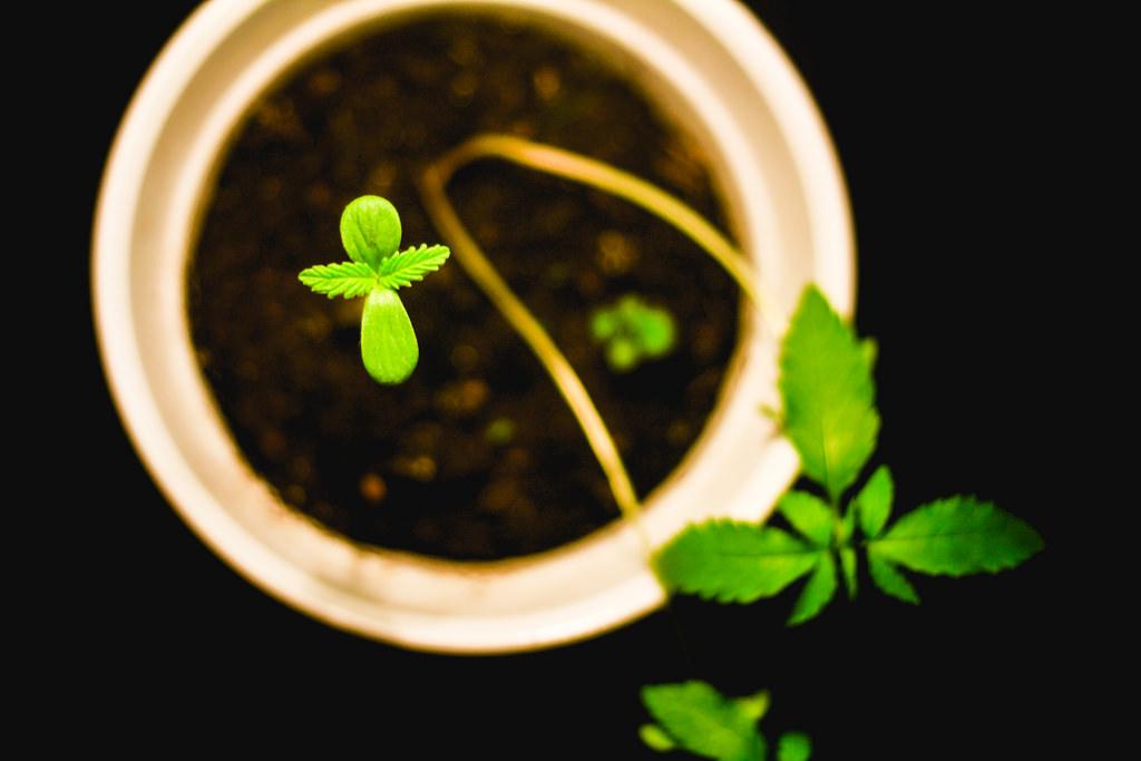 Não precisa de sementes! 15 alimentos que brotam de seus próprios pedaços