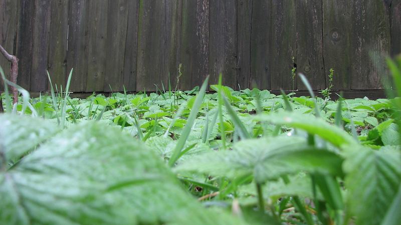 9 plantas para cultivar em casa que ajudam a tratar problemas de saúde