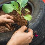 Quer começar uma horta em casa? Conheça 11 alimentos que têm cultivo rápido