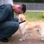 Animais que seriam sacrificados por comportamento violento são adestrados por presidiários