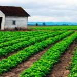 Dinamarca quer ser primeiro país a ter agricultura 100% orgânica
