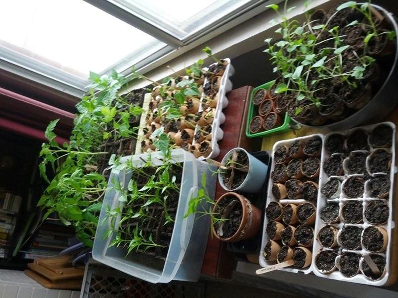 Sem quintal? 12 alimentos que você pode plantar dentro de casa!