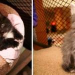 Nos EUA, funcionários públicos ganham companhia de animais de abrigo durante expediente