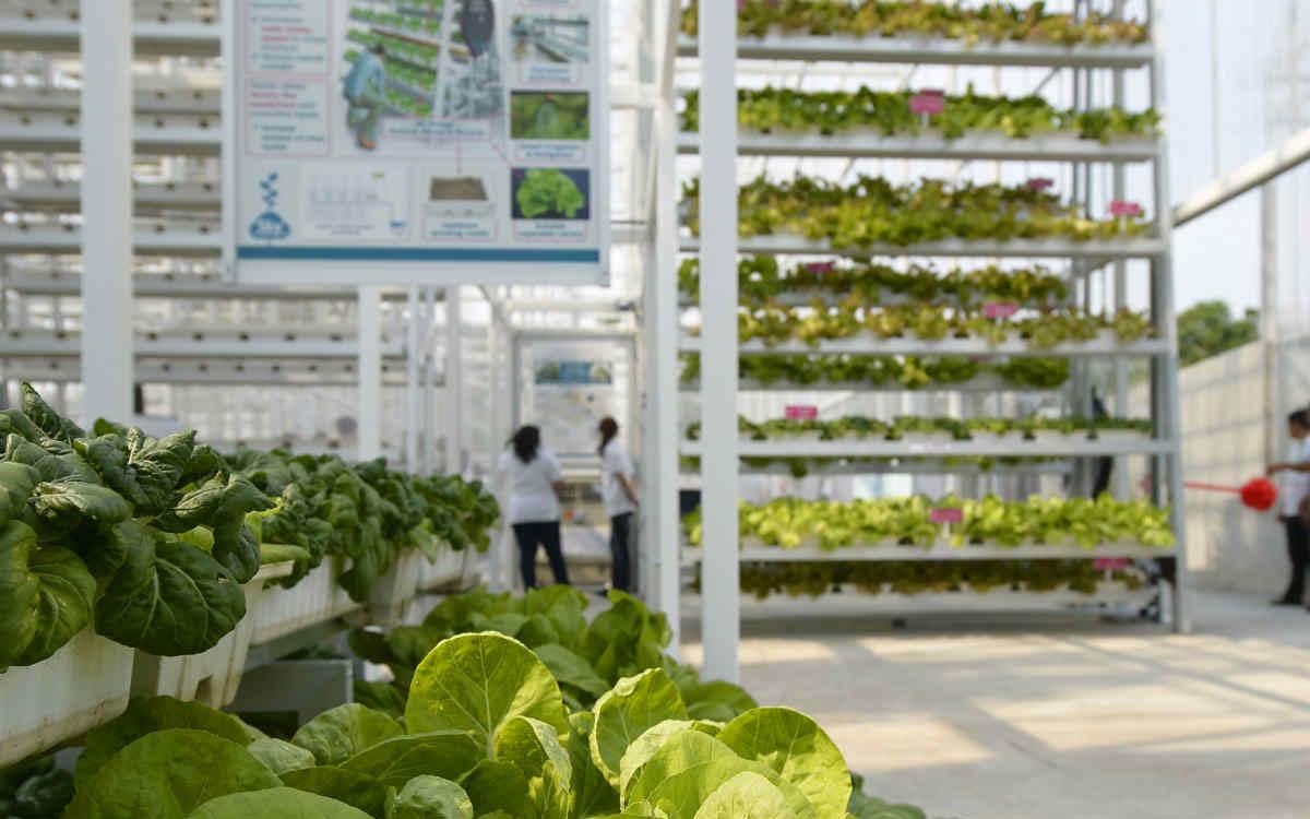 A fazenda vertical (orgânica!) que solucionou o problema da baixa produção de legumes em Cingapura