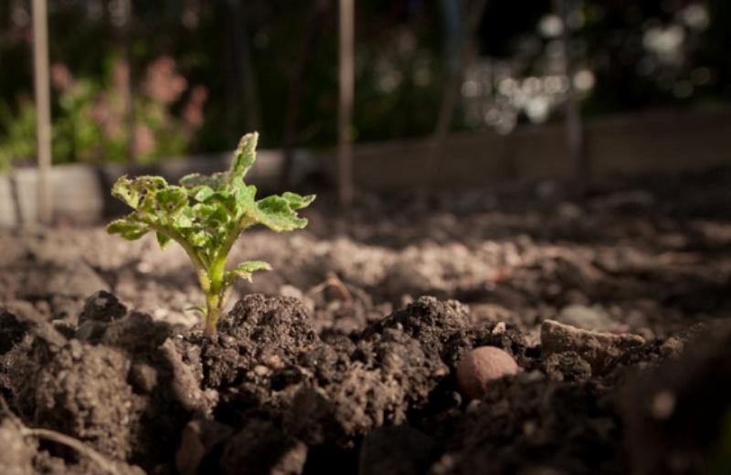São Paulo pode ganhar uma horta comunitária em cada praça da cidade