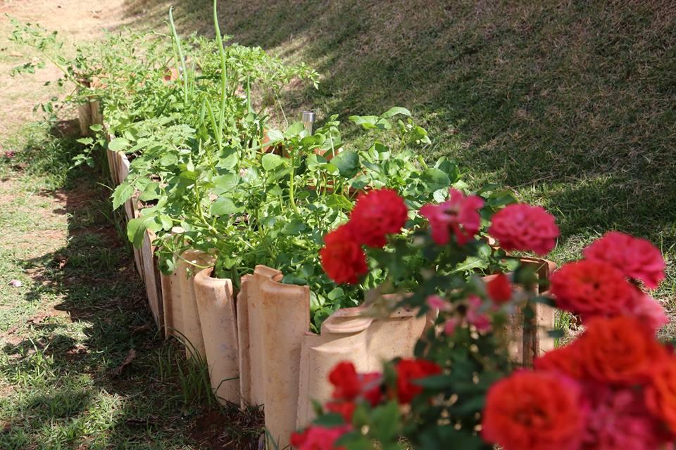 7 temperos que não podem faltar na sua horta orgânica