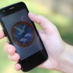 Estudantes desenvolvem protótipo de aplicativo para monitorar animais encalhados