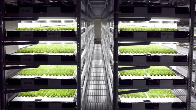 A fazenda vertical que fica no meio da cidade e produzirá 30 mil pés de alface todos os dias