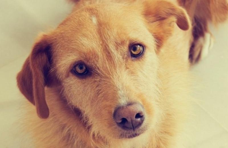 EUA classificam maus tratos a animais como 'crime grave' e convocam FBI para investigá-los