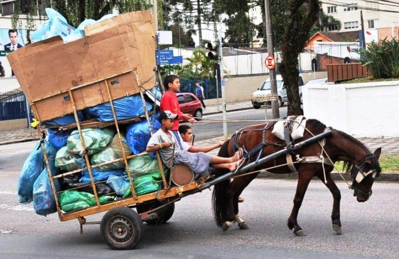 RJ é primeiro Estado do Brasil a proibir carroças puxadas por animais