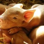 Vegetarianismo: desculpe, mas precisamos falar sobre isso