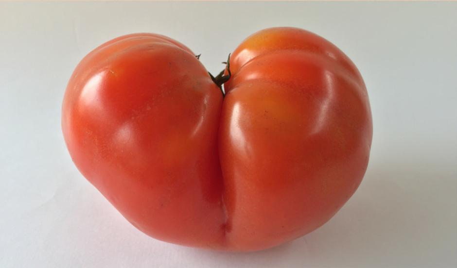 Startup brasileira faz delivery de frutas e verduras 'imperfeitas' a preço abaixo do mercado
