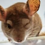 São Paulo é primeira cidade do Brasil a proibir comércio de peles de animais