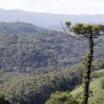 Paraná utiliza drones para monitorar unidades de conservação e evitar desmatamento
