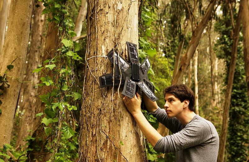 Startup usa celulares que iriam para o lixo para combater desmatamento nas florestas brasileiras