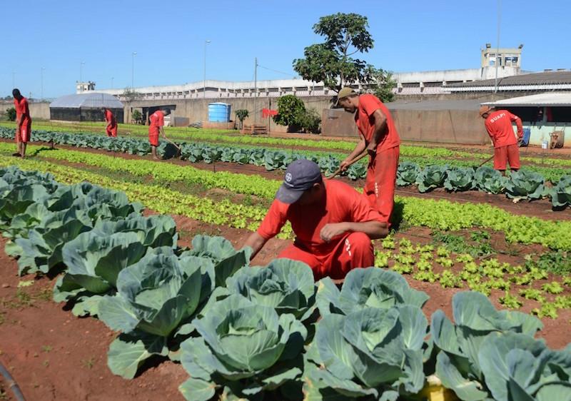 Presídio de MG possui horta em que presos cultivam próprios alimentos (e plantas medicinais)
