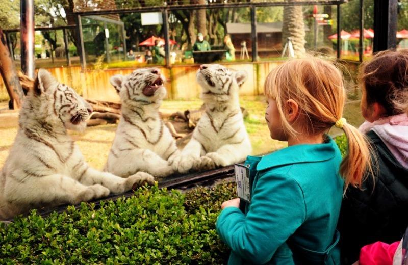 Buenos Aires fechará seu zoológico (e soltará animais em reservas florestais)