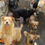 Portugal vai proibir Centros de Zoonoses de sacrificar animais