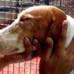 A reação de 156 beagles resgatados de laboratório ao ver a luz do sol pela primeira vez
