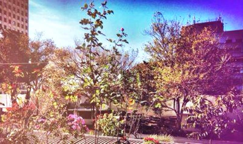 Galeria do Rock em SP inaugura horta orgânica comunitária que tem som ambiente