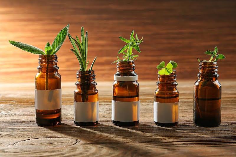 Oficinas ensinam a despertar intuição e prevenir doenças a partir do uso de plantas