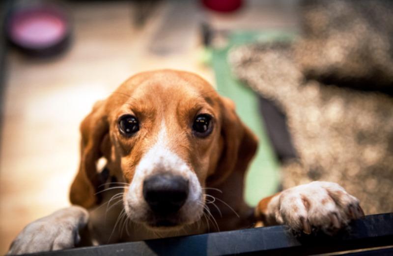 Multinacional oferece licença remunerada para funcionários que adotarem animal