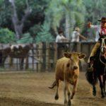 Comissão de Meio Ambiente considera rodeio uma atividade de cultura popular