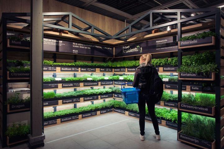 Holanda ganha primeiro supermercado com estufa interna para comercializar ervas frescas