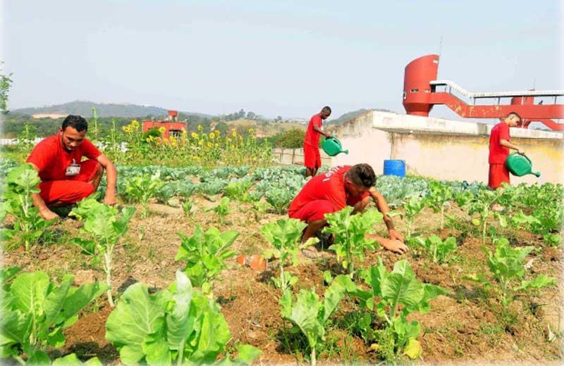 Presos de MG cultivam horta no presídio (e alimentos são entregues a famílias pobres da região)