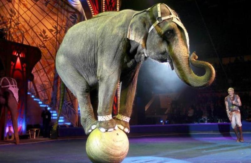 SC sanciona lei que proíbe apresentações de animais em circos