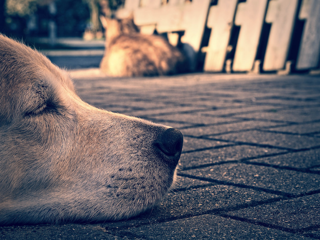 Câmara aprova projeto que proíbe centros de zoonose de sacrificar cães e gatos