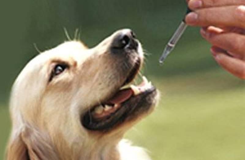 Animais doentes são tratados com maconha medicinal nos EUA (e donos relatam resultados surpreendentes)